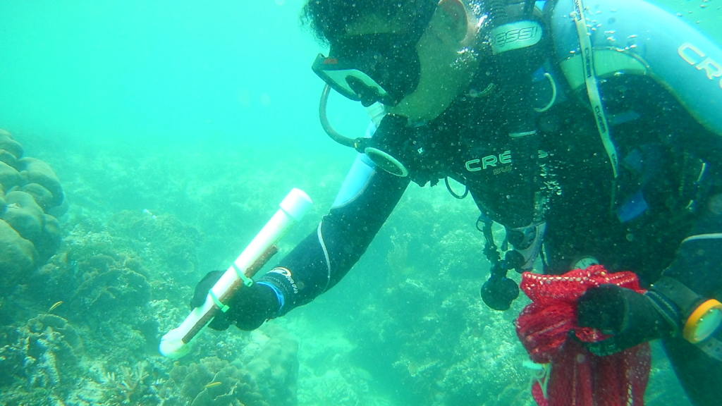 Coral Gardeners working (2)
