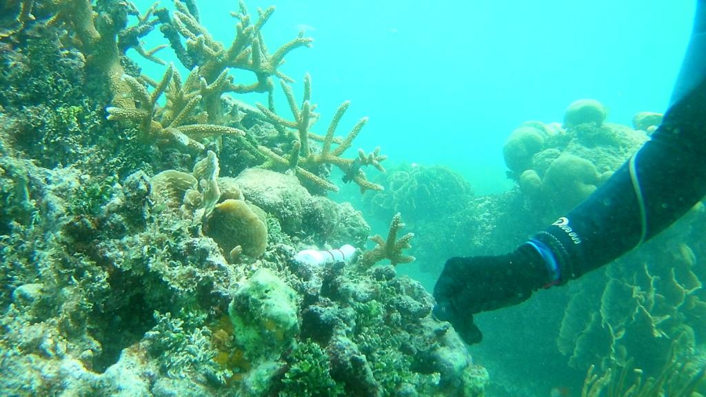 Coral Gardeners working (3)