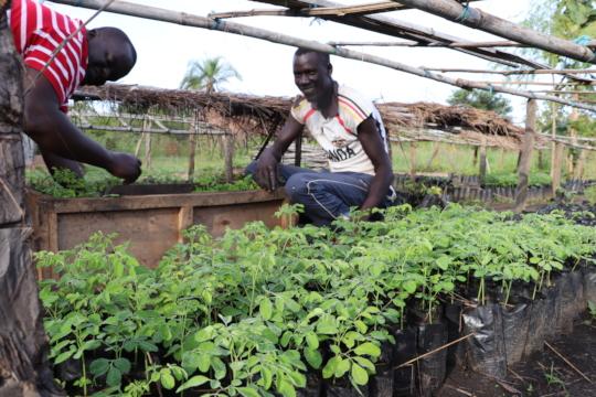 One of our moringa nurseries in northern Uganda