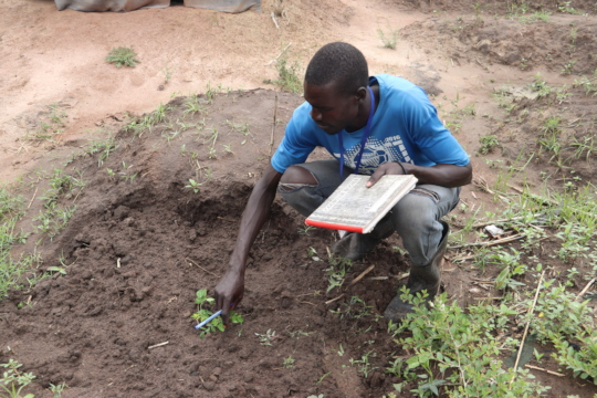 A refugee EPC checking on a moringa seedling