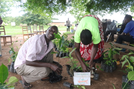 Tree planting distribution with refugees