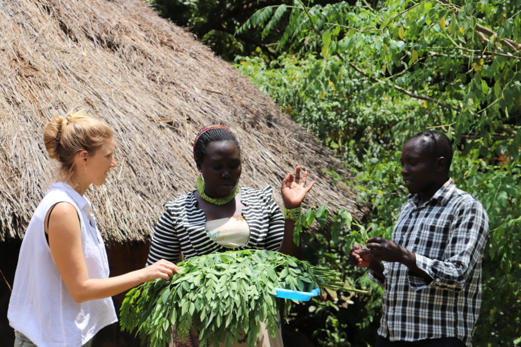 Plant Native Moringa Trees for Refugees in Uganda