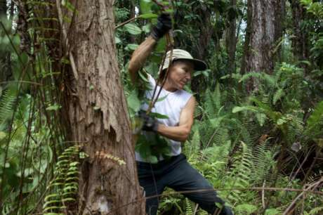 Restore & Protect Hawaii's Native Lowland Forest