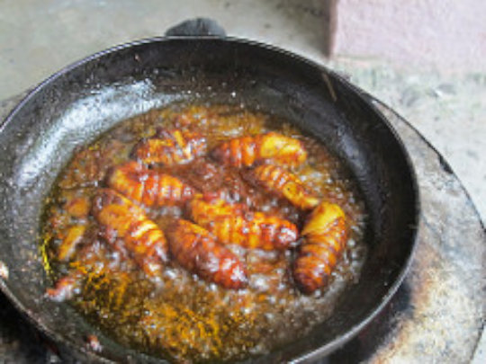 Silk worm pupae for lunch