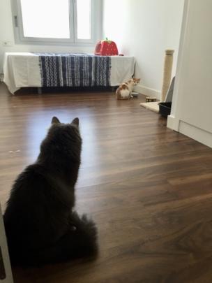 Nuni the stalker
