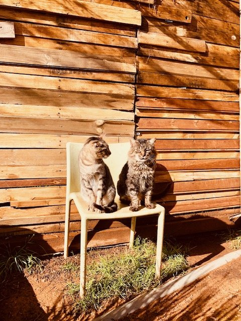 Support No Kill Cat Sanctuary