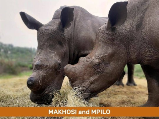 Makhosi & Mpilo and Pedaling Against Poaching