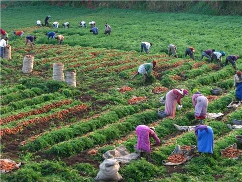 Organic food is safe for health awareness
