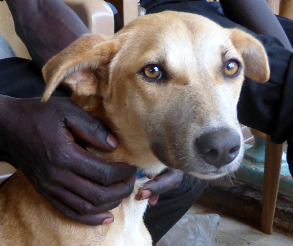 Help Northern Uganda's Dogs