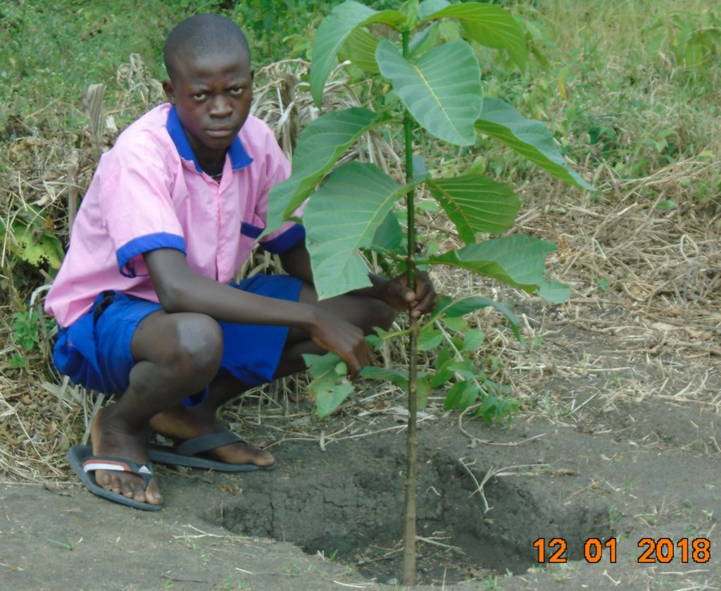 Trees per Child in 10 primary Schools in Bunyala