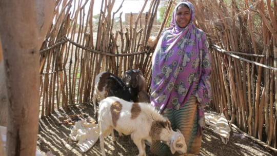 Each woman sponsors another to start a herd