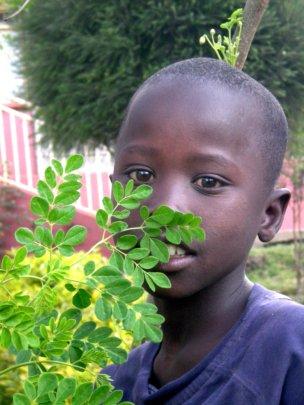 Moringa for Nutritional Health of 1000 children