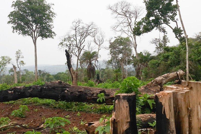 Restore Ecosystems to Conserve Environment (RECE)
