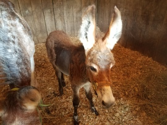 Add more shelter for rescue horses in Dunkirk Md