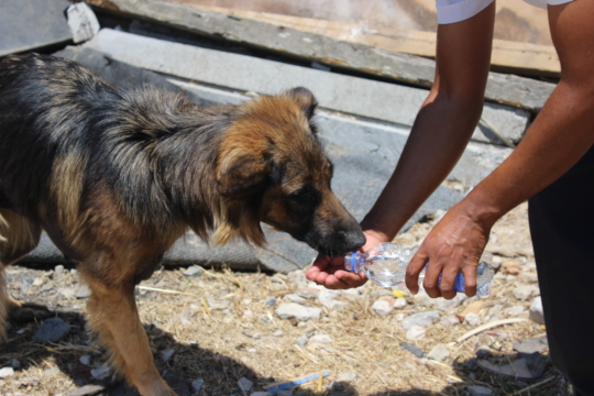 We could take water to animals in need
