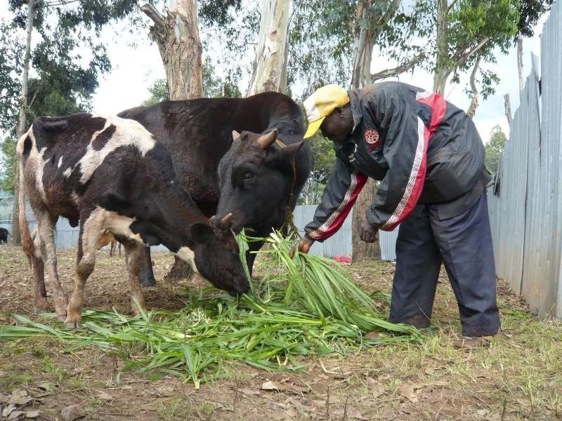 Burundi: Donation of Cattle to 6 Needy Families