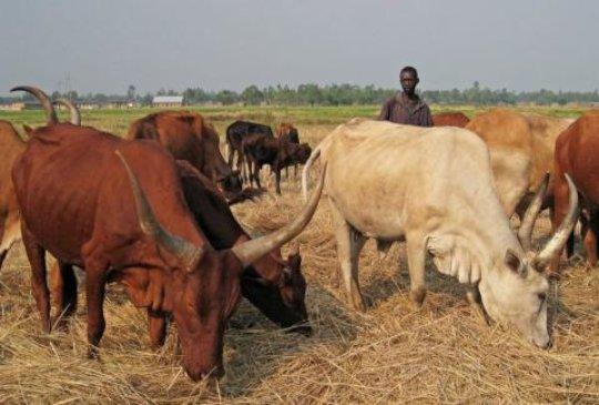 Burundi: Donation of Cattle to 6 Needy Families