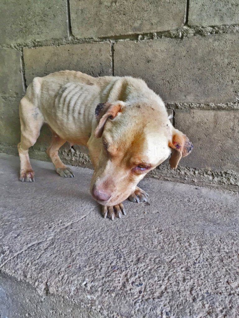 Change the lives of dogs and cats in Venezuela