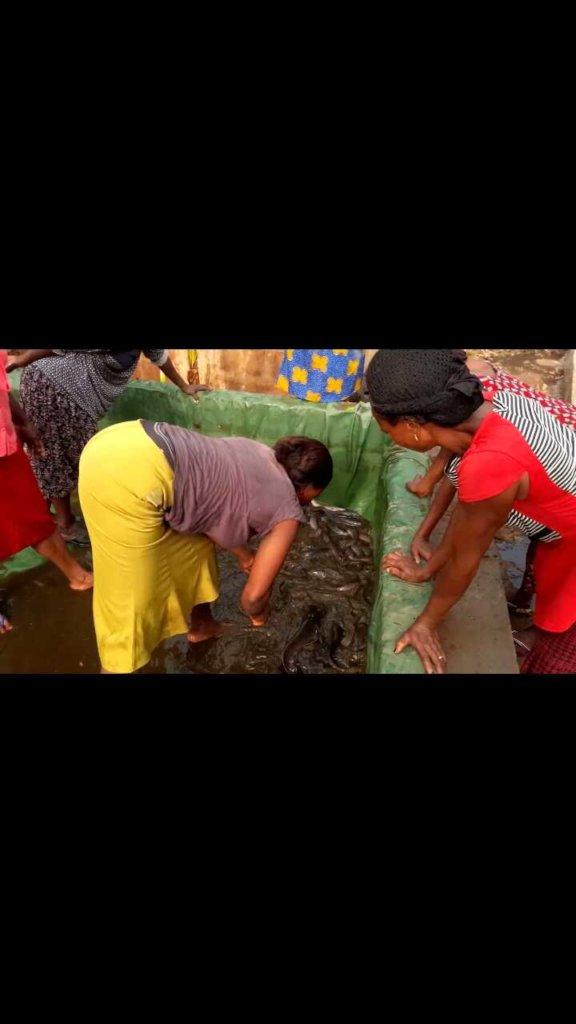 Build a fish farm, save Nigerian women from Penury