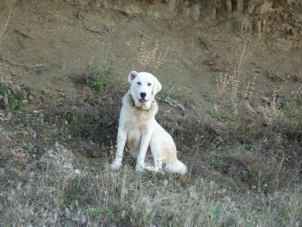 Support Greek farmers,Shepherdog breeds & wildlife