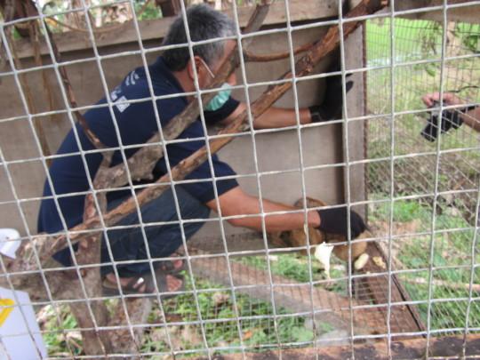 Doc poto 4 individu malnutrition loris in B.lawan