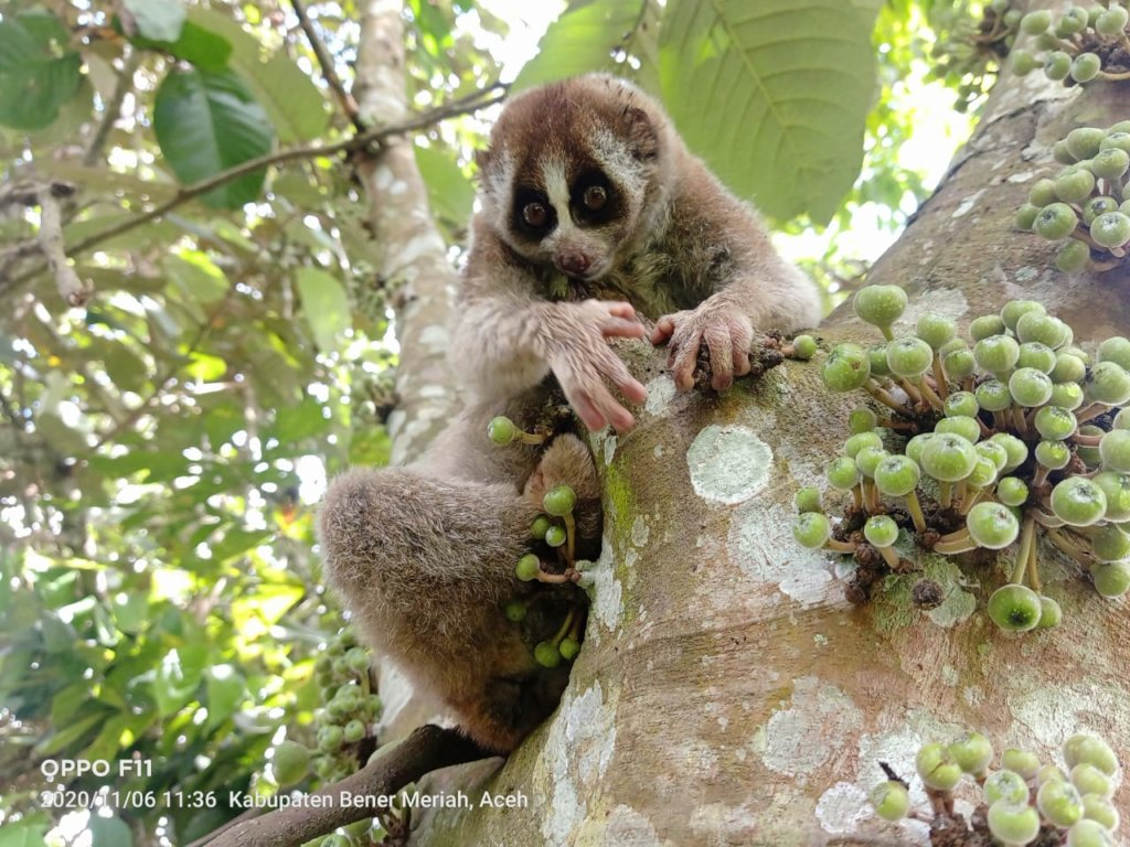 SLOW LORIS & WILDLIFE NEW REHABILITATION CENTER