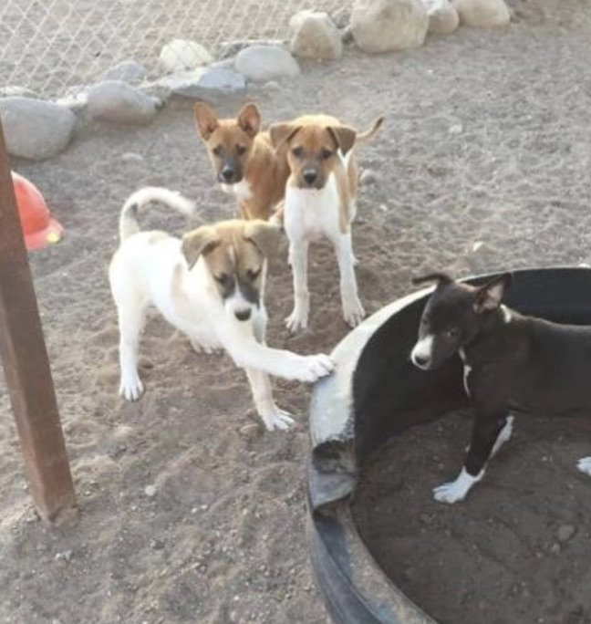 Rescue 100 Abandoned Dogs in Mexico