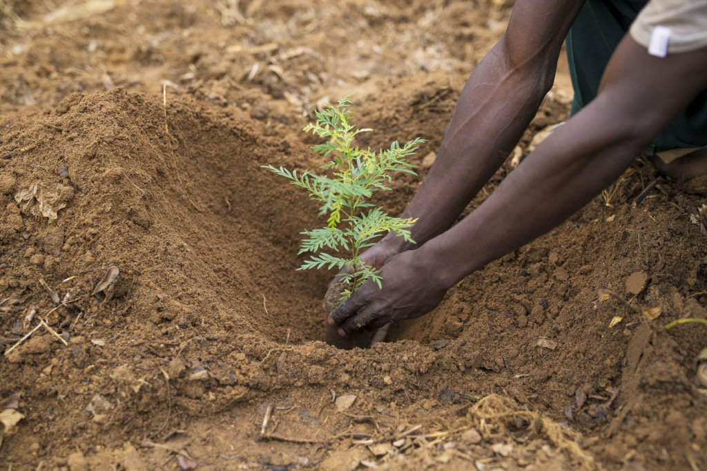 Help 60 Rwandan Students Fight Poverty with Trees