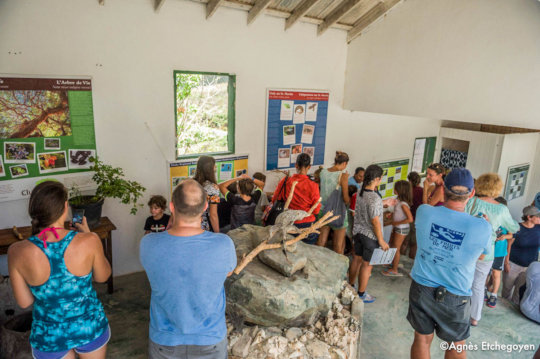 Museum for a day-the Endemic Animal Festival.