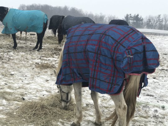 Help Provide Hay for 82 Rescue Horses in the US