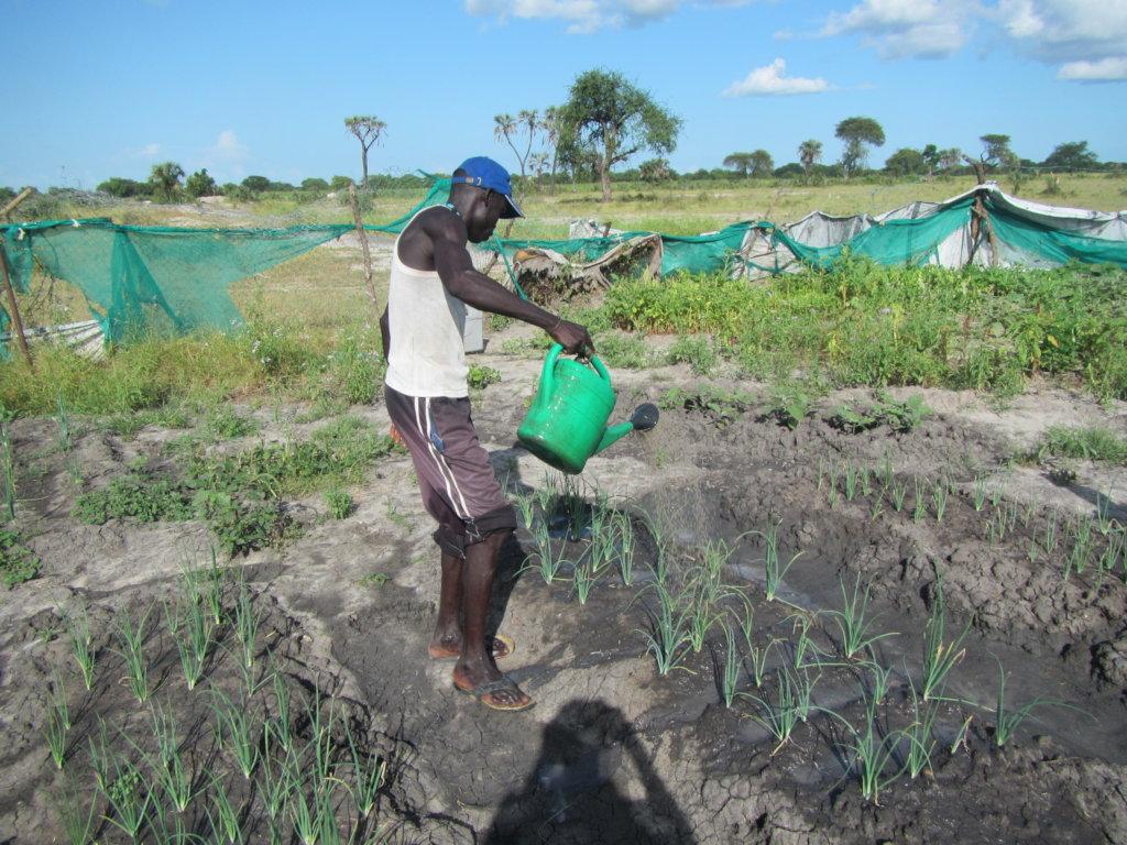 Stabilizing the livelihoods of 600 IDPs in Mundri