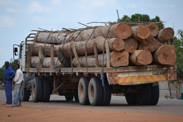 Help Investigate Eco-Crimes in Southern Africa