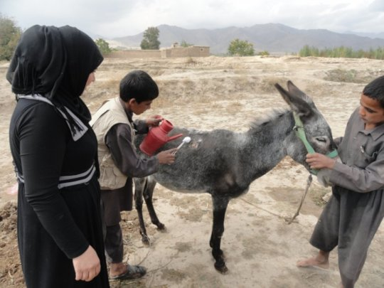Save Life of 1,500 Donkeys in Afghanistan