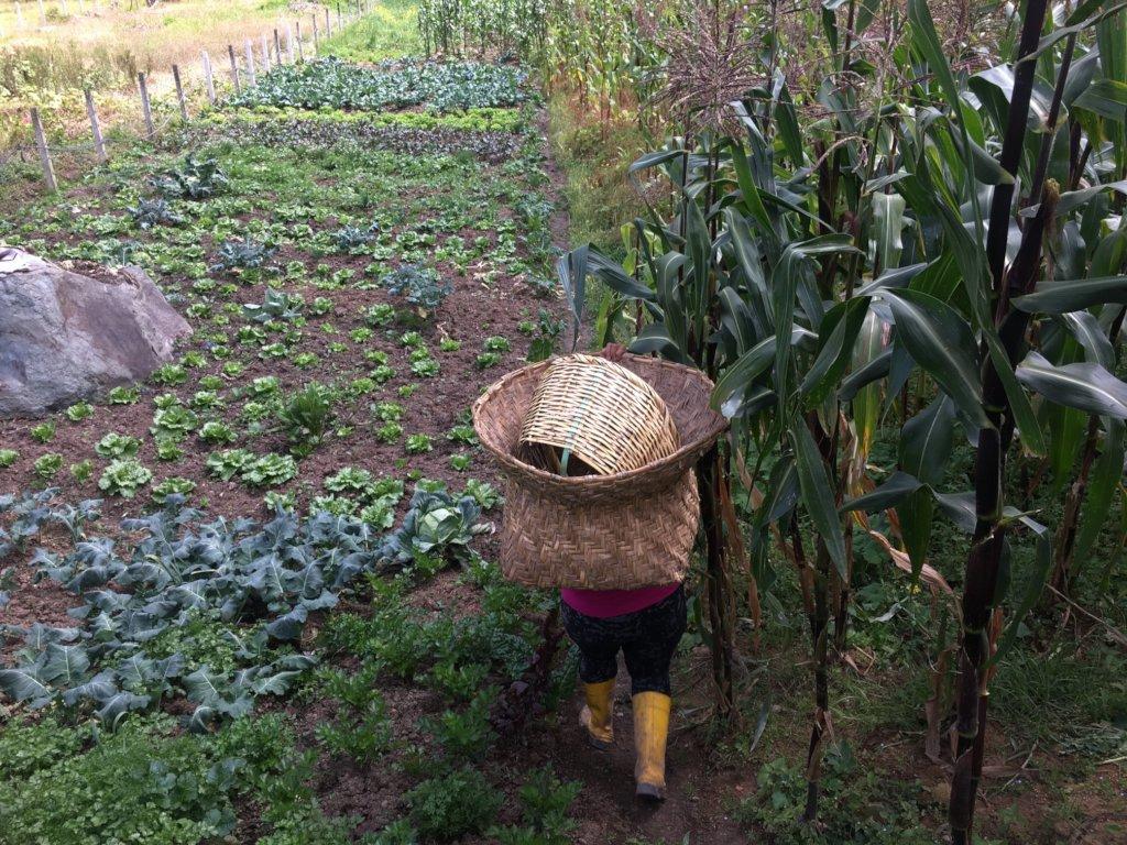 The beautiful agricultural life in Sayausi