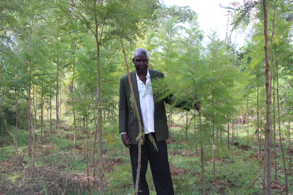 A beneficiary with his established tree plantation