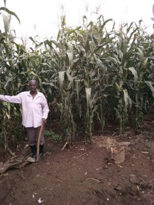 Maize Farmer