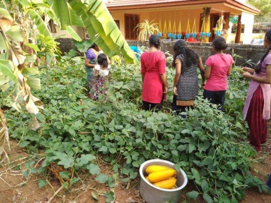 harvesting the 'crop'!