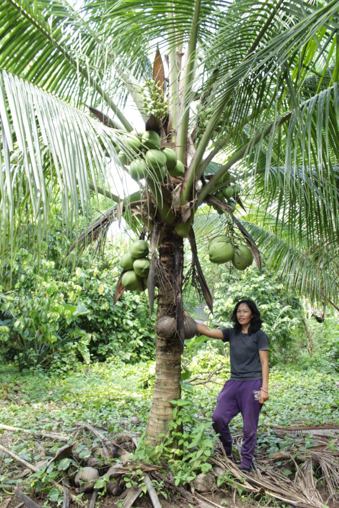 Help a Coconut Farmer in the Philippines Today!