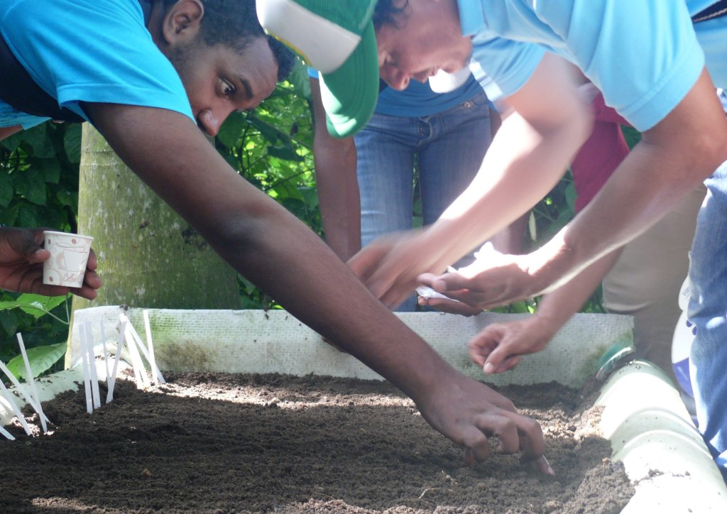 Teach 15 families in Cartagena how to grow trees