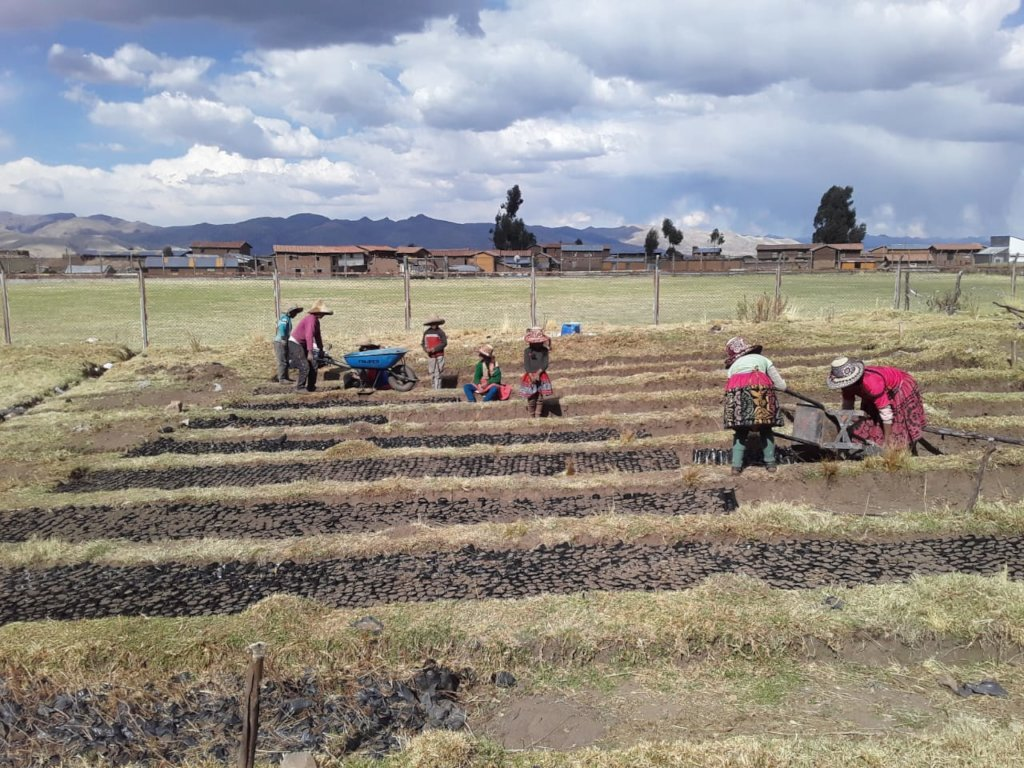 Donate trees to help impoverished families in Peru