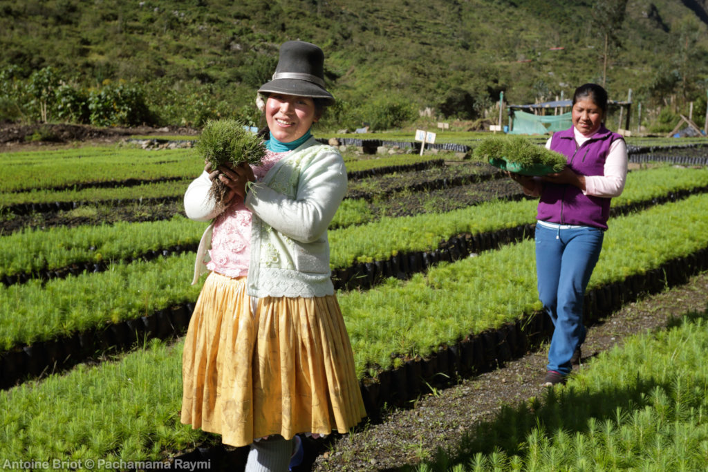 Save families of poverty by planting trees in Peru