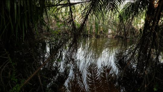 The river Densu, Otuaplem's previous water source.