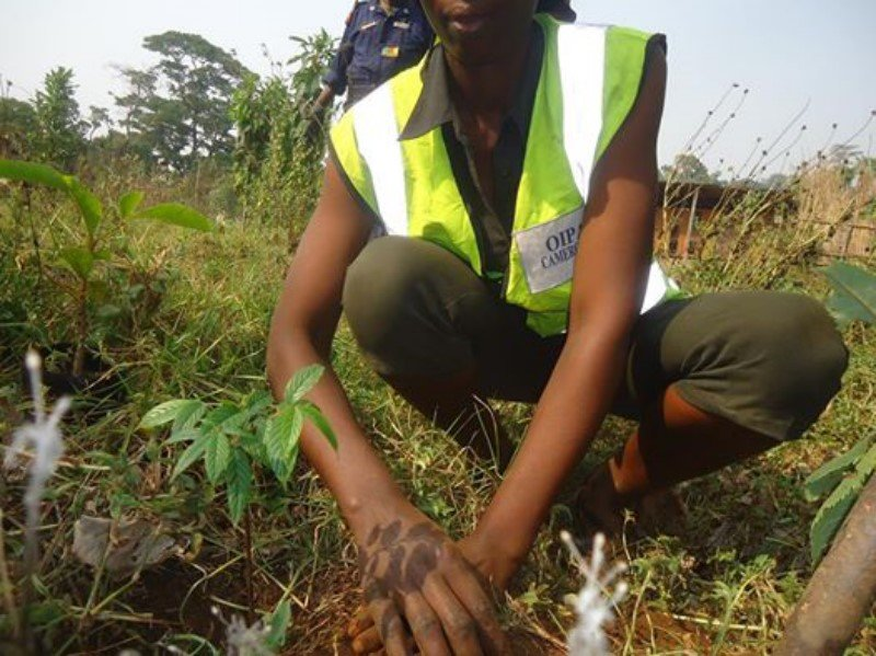 Plant 50000 Trees to Save 2 villages in Cameroon