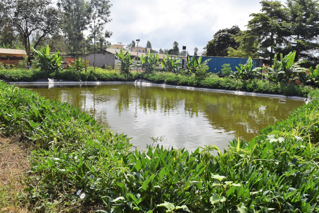 New Fish Pond!