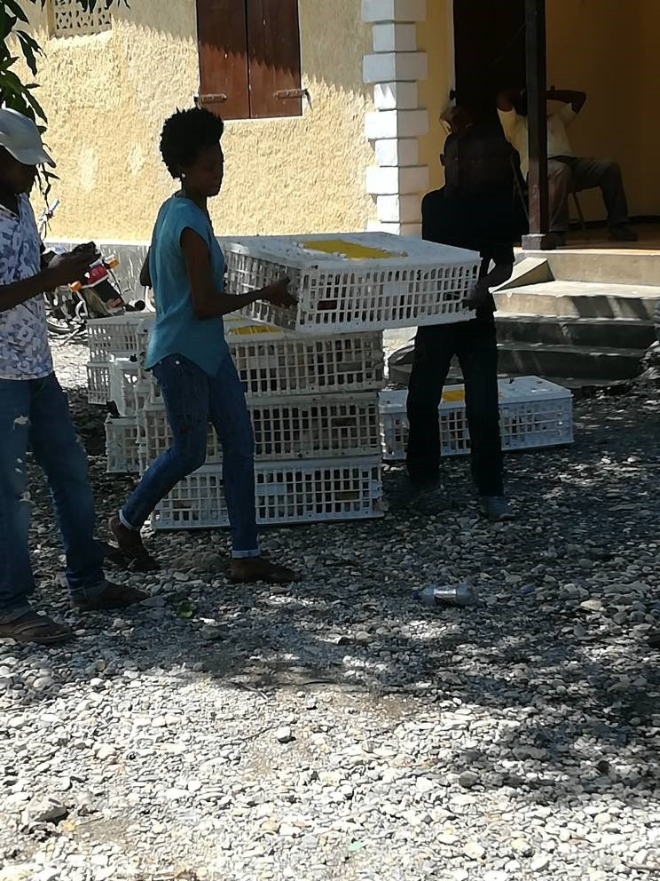 Help 2000 Haitian Families Regain Self-Sufficiency