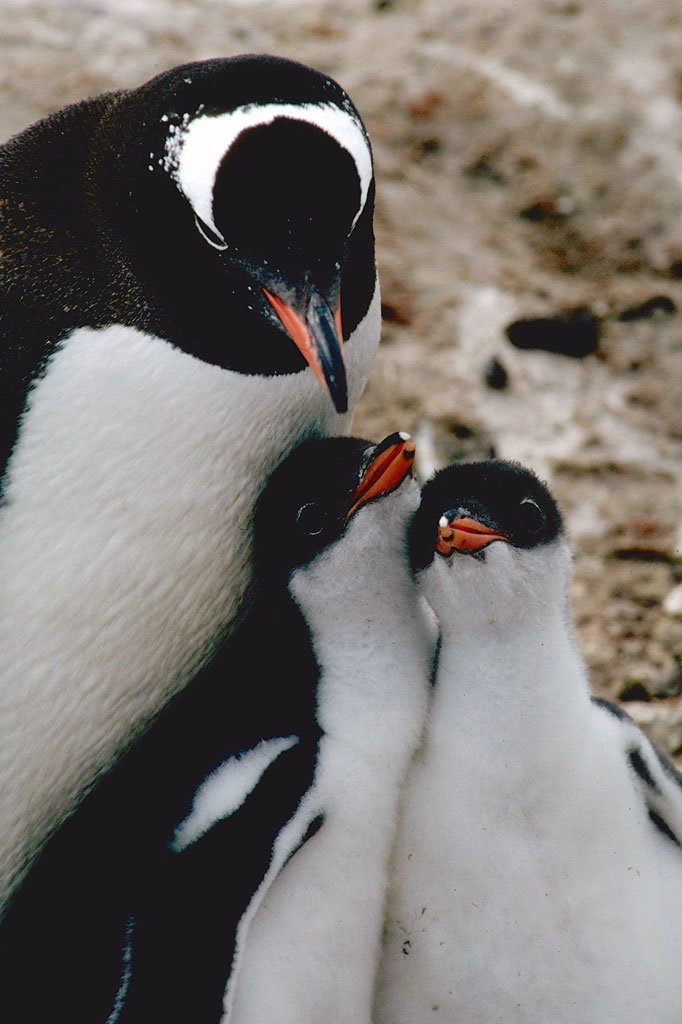 Antarctic Trip: Research Penguins, Climate Change