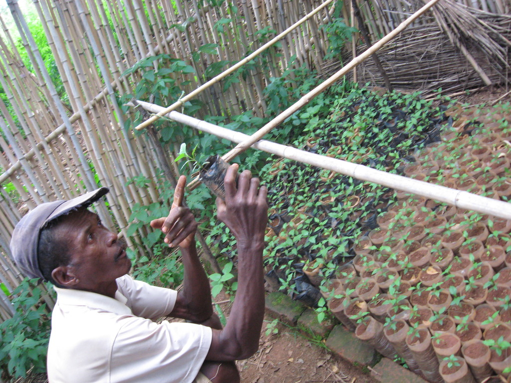 Master gardener Jean in Fiarenana