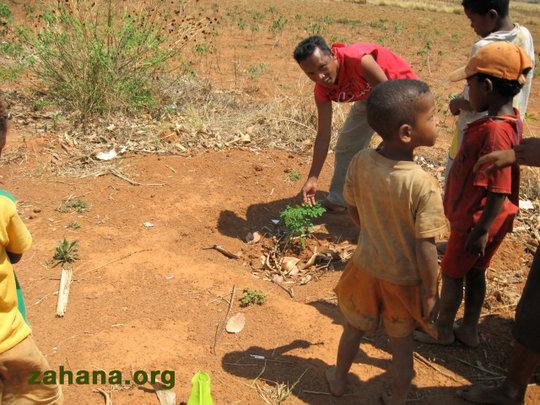 Planting Moringa trees in the schoolyard