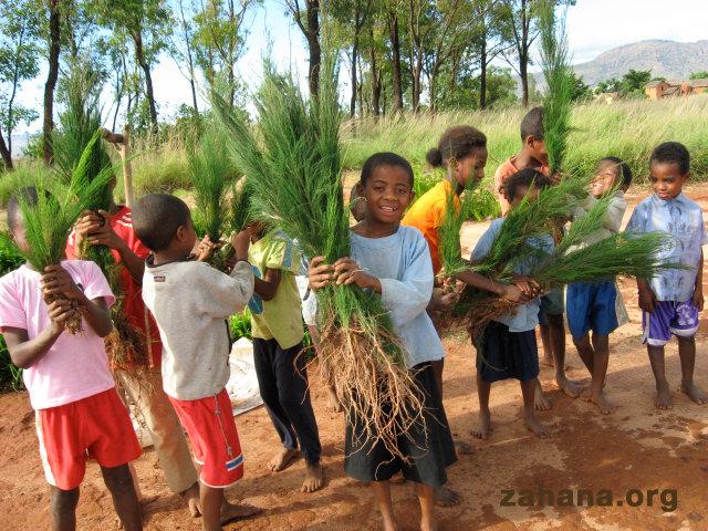Seedlings for the school garden