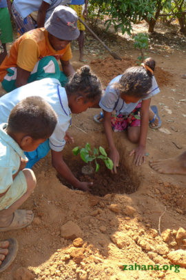 Planting seedlings with the Bary the gardener